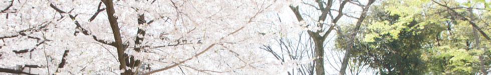 お宮さん東京の出張撮影ブログ